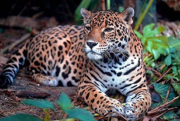 Amazonas: Mundo realismo mágico colombiano